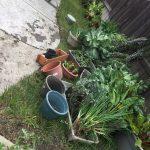 2017 Garden Replants