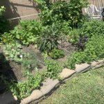 Backyard Oasis and Garden Bounty Trickle